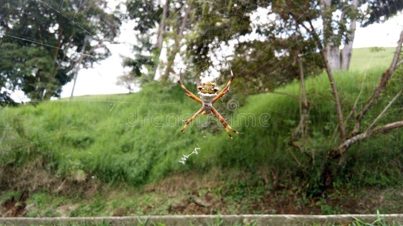 Spinne auf seinem Web lizenzfreie stockfotografie