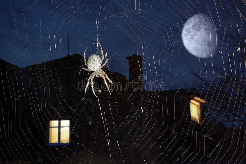 Spinne auf Spinnennetz lizenzfreies stockfoto