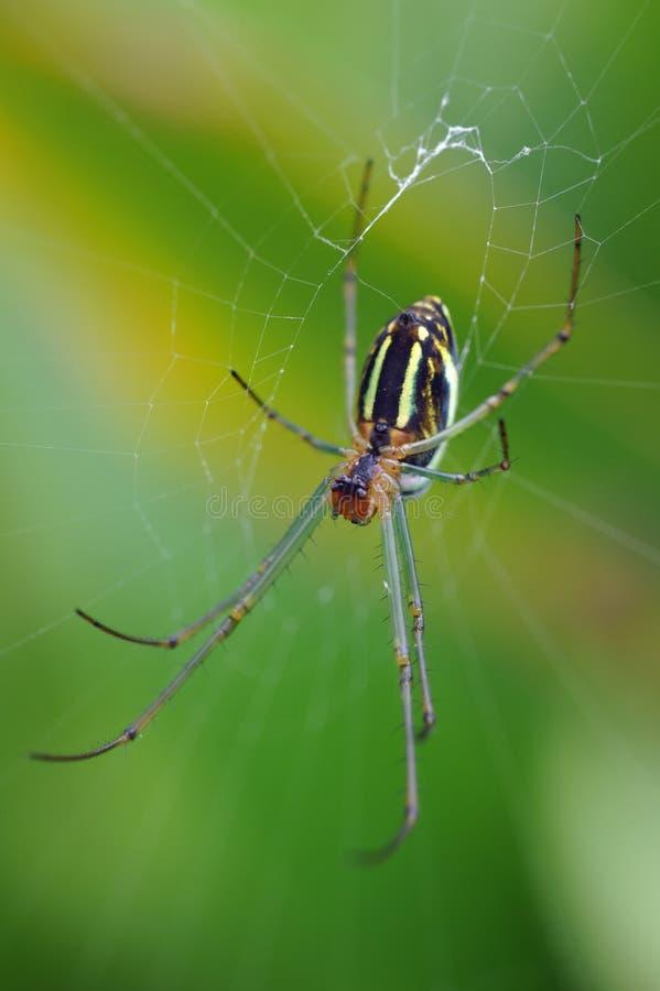Spinne auf Web lizenzfreie stockfotografie