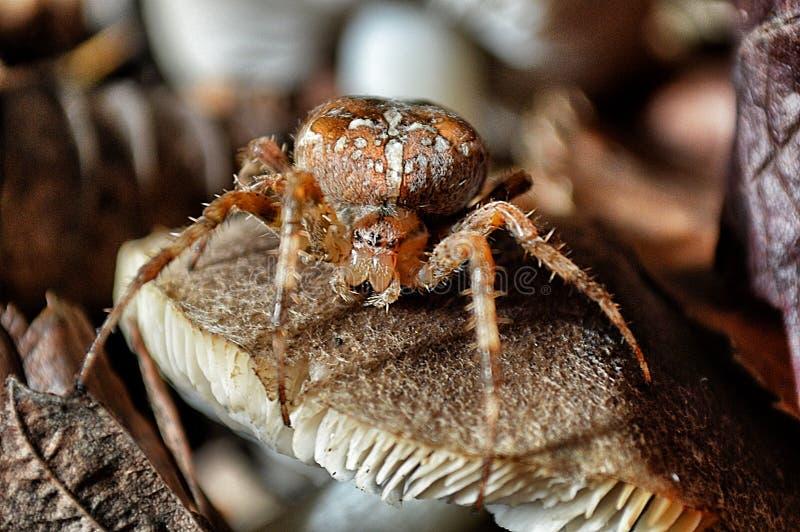 Spinne in der Falllandschaft lizenzfreie stockbilder