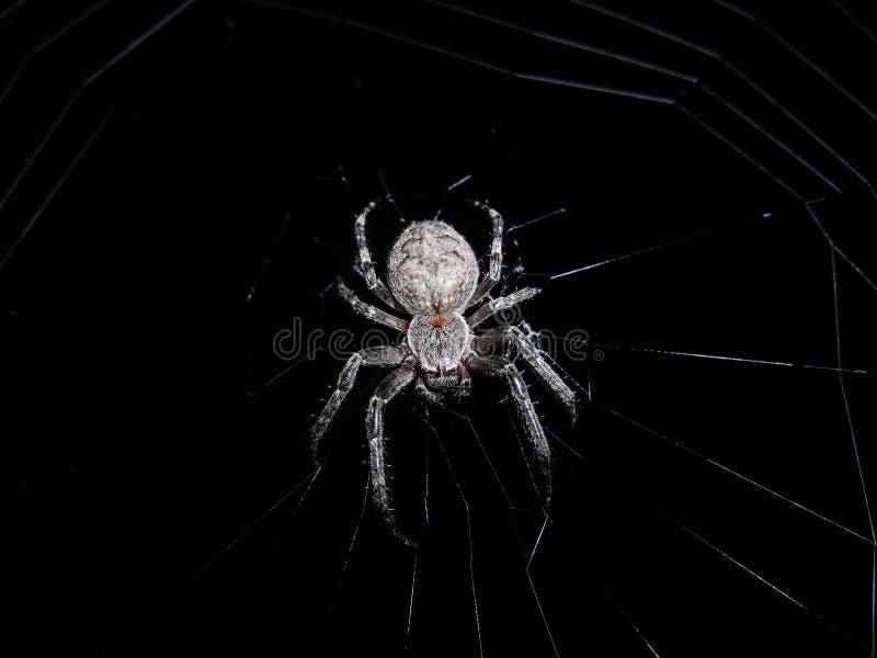 Spinne In Der Nacht Free Public Domain Cc0 Image