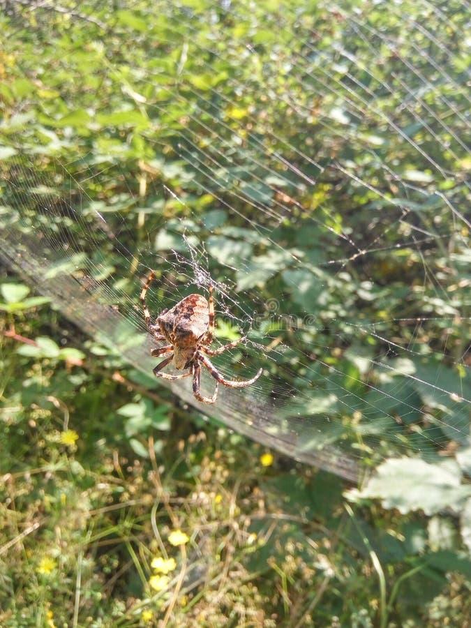 Spinne in der Natur stockfotos