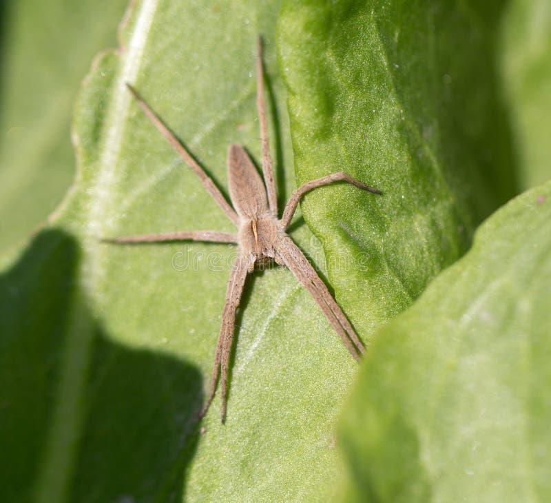 Spinne in der Natur Makro stockfotografie