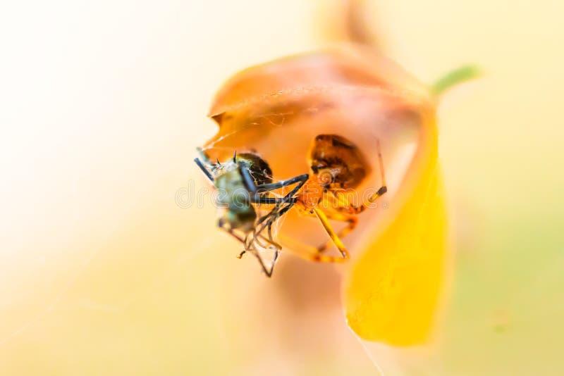Spinne, die Nahrung isst lizenzfreies stockbild
