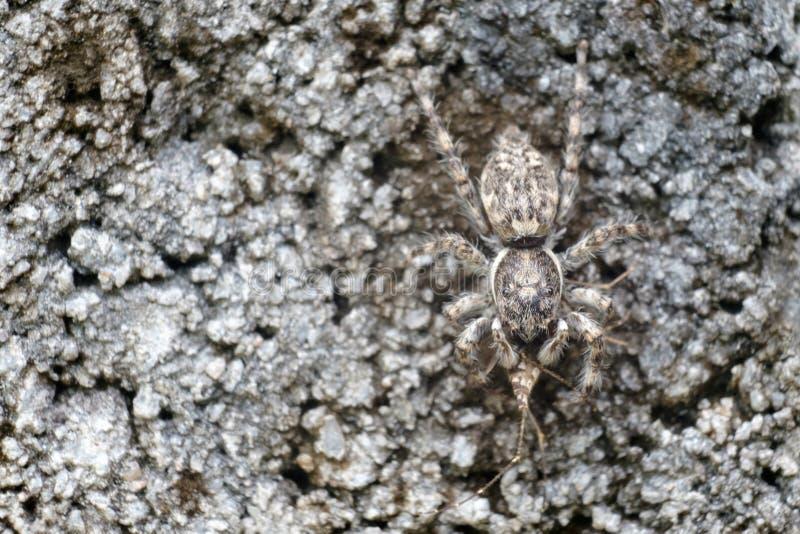 Spinne, die Opfer isst stockbilder