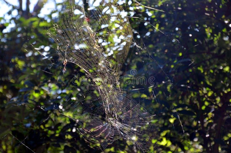 Spinne, die am Spinnennetz hängt stockfoto