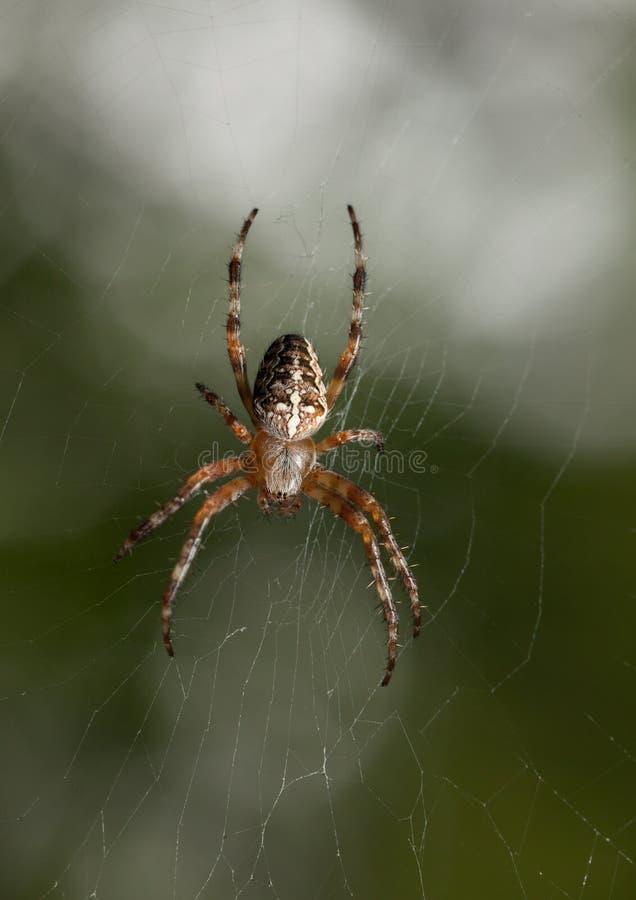 Spinne im Garten lizenzfreies stockbild