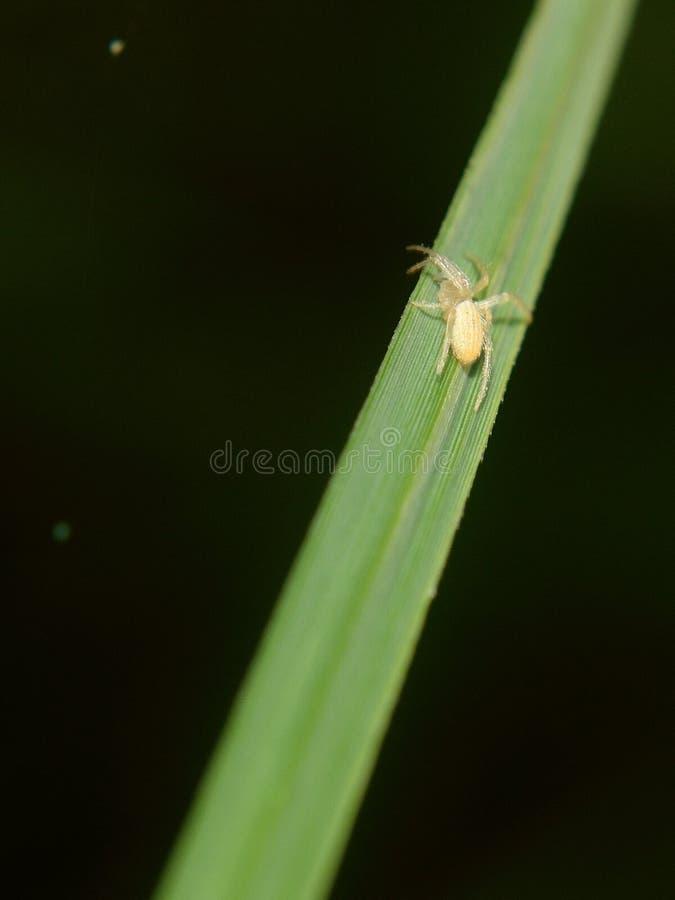 Spinne im gr?nen Blatt stockbilder