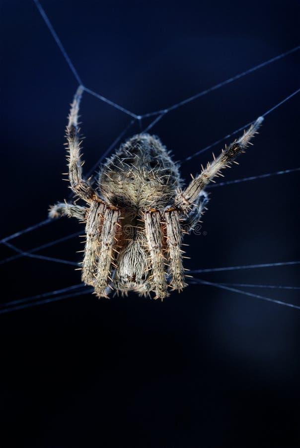 Spinne im Mondschein lizenzfreie stockbilder