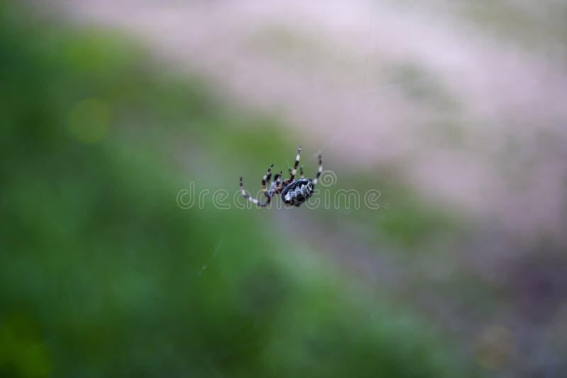Spinne im Netz beim Griechenland-Kampieren stockfoto