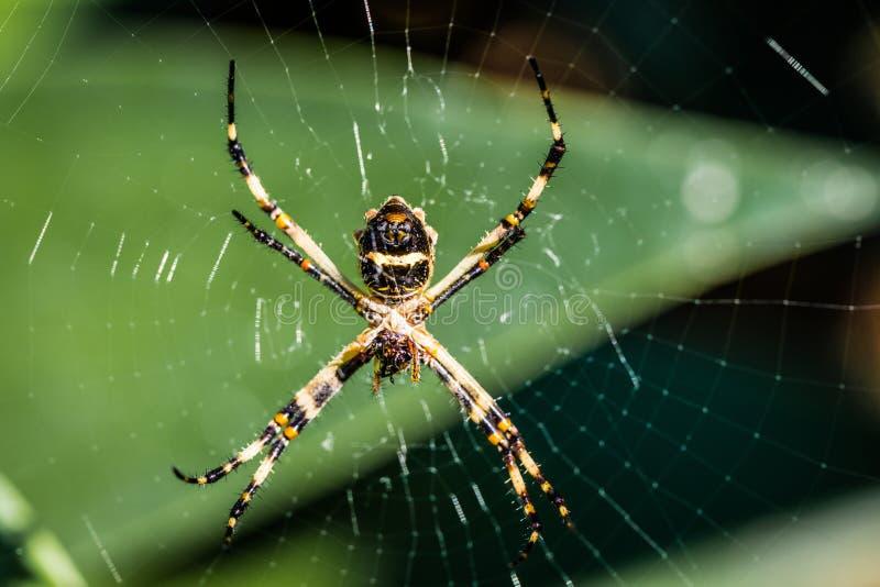 Spinne im Netz am botanischen Garten lizenzfreies stockbild