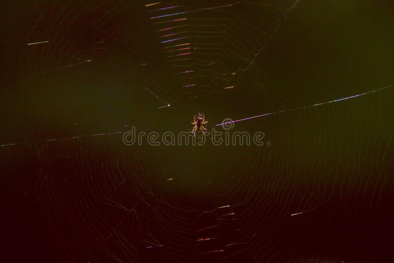 Spinne im Netz, das in der Sonne glänzt stockfoto