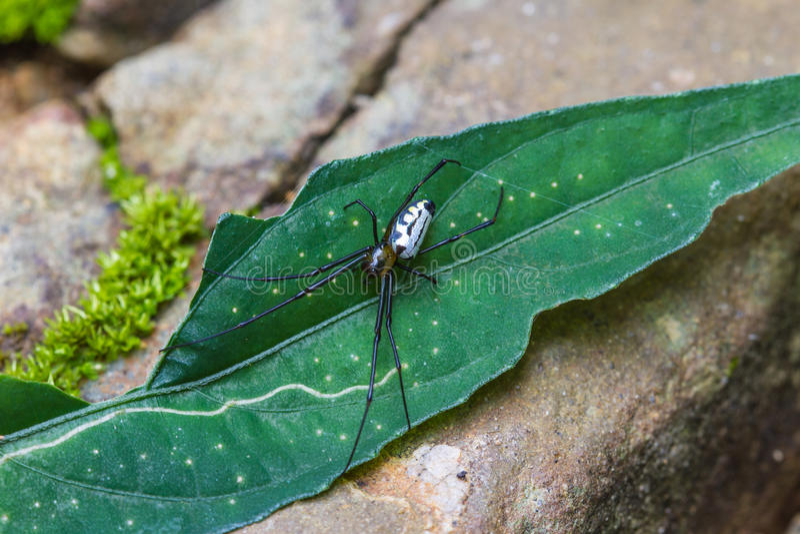 Spinne im Wald, abstrakt im Naturhintergrund lizenzfreie stockfotos