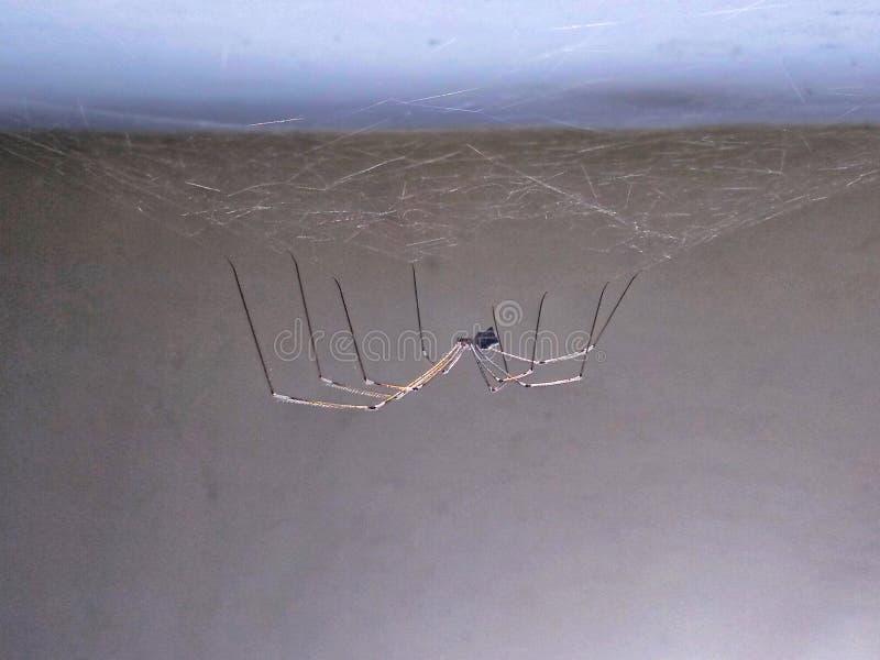 Spinne innerhalb des Hauses lizenzfreie stockfotografie
