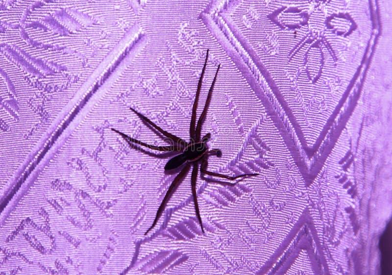 Spinne mit den großen langen Beinen stockfoto