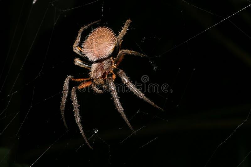 Spinne nachts lizenzfreies stockbild