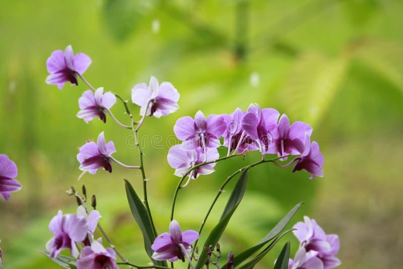Spinne, Orchidee lizenzfreie stockfotografie