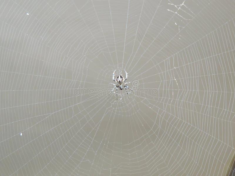 Spinne ` s Netz mit Spinne in der Mitte stockbild