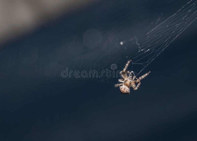 Spinne in seinem dunklen Makro des Netzes lizenzfreies stockfoto