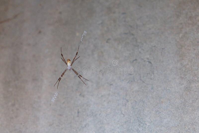 Spinne sitzt in der Mitte des Netzes stockbild