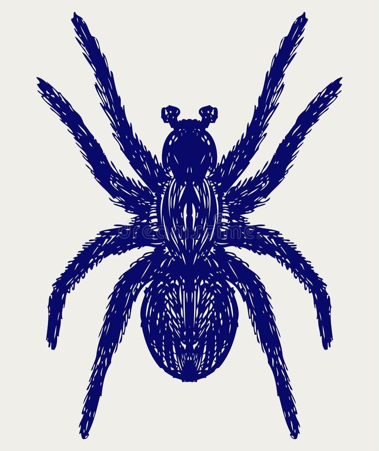Spinne Tarantula vektor abbildung