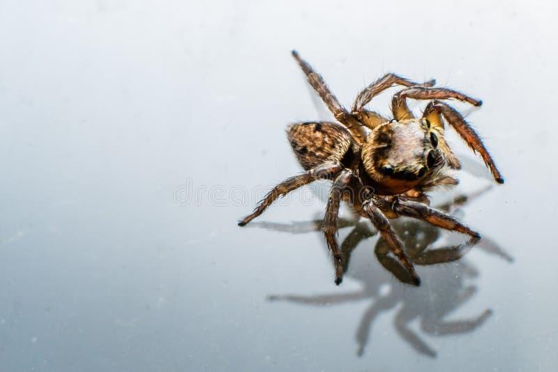 Spinne und sein Schatten stockbild