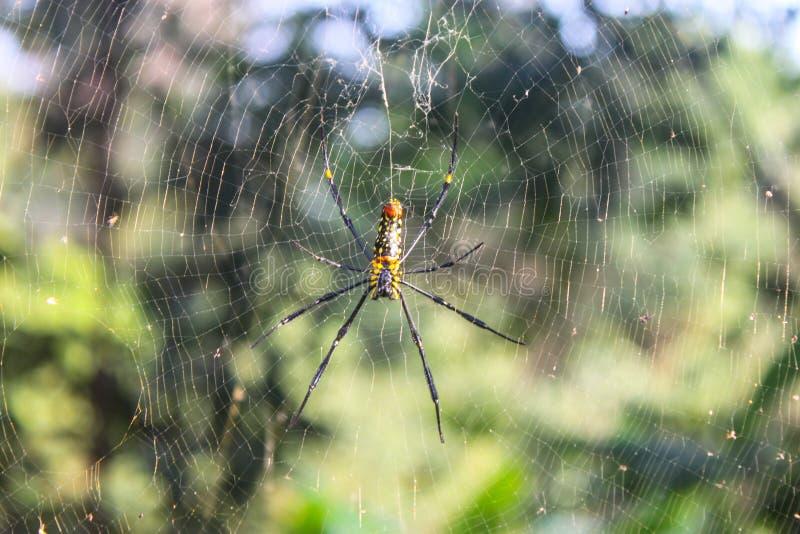 Spinne und sein Web lizenzfreie stockfotos