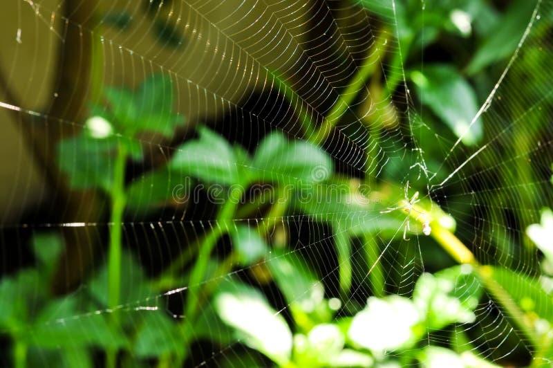 Spinne und Spinnennetz im Wald lizenzfreies stockbild