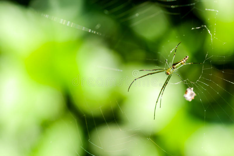 Spinne und Spinnennetz im Wald lizenzfreie stockfotografie