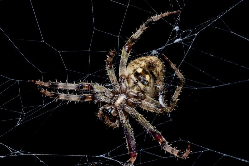 spinnen stockbild