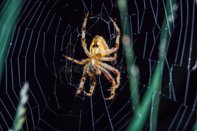 spinnen stockfotografie