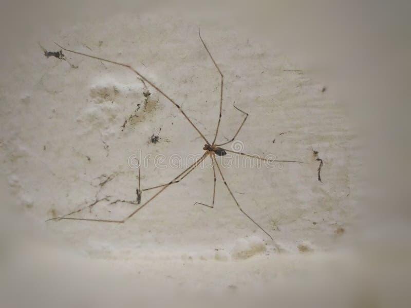 spinnen stock afbeelding