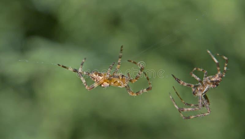 Spinnen die dichterbij komen royalty-vrije stock foto's