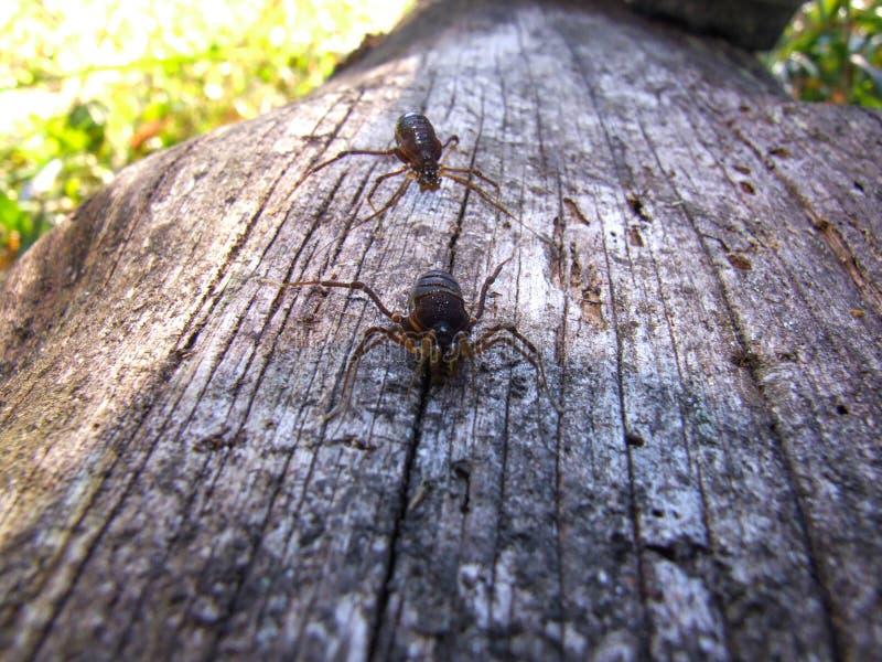 Spinnen in einem Holz lizenzfreies stockfoto