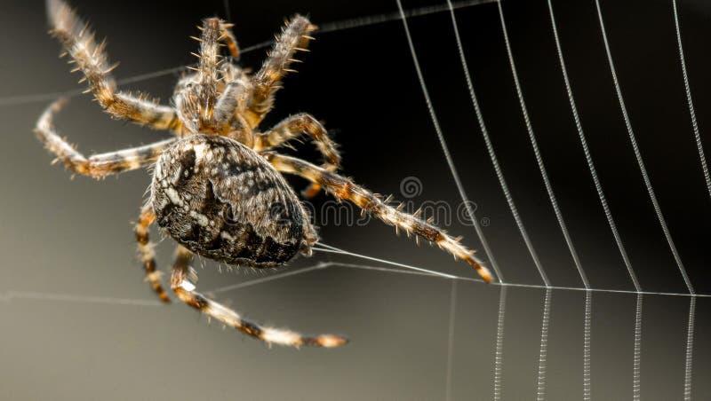 Spinnen-Gebäude-Netz stockbilder