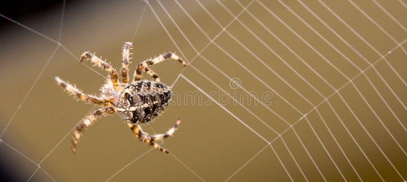 Spinnen-Gebäude-Netz lizenzfreie stockfotos