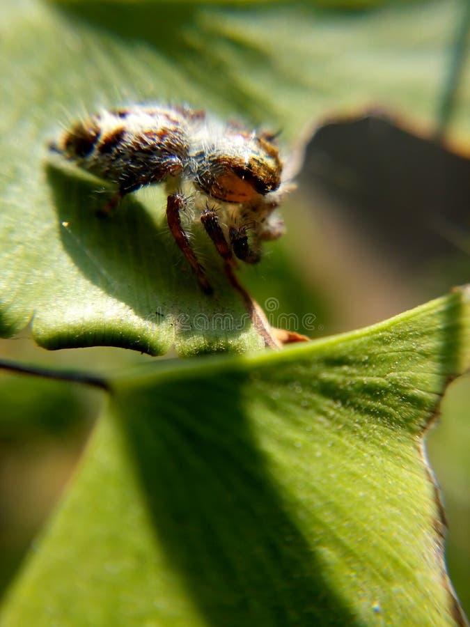 Spinnen-Kunst stockfoto