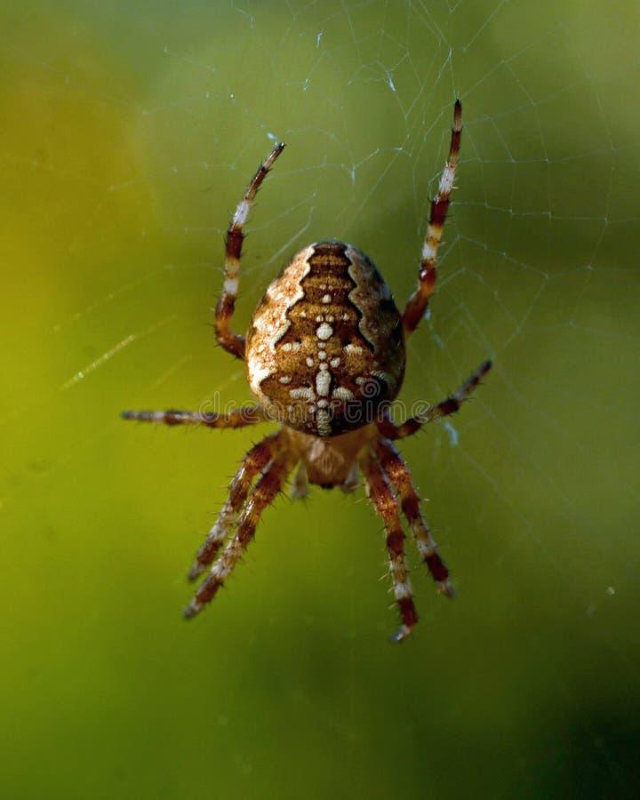 Spinnen mit einem Kreuz lizenzfreie stockfotos