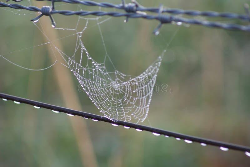 Spinnen-Netz auf Zaun stockfotografie