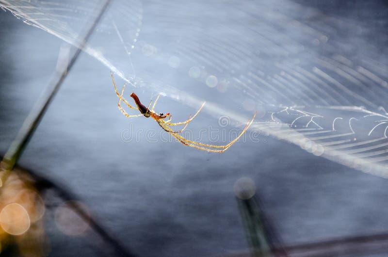 Spinnen-Netz, hoch aufgeschosse Keller-Spinne lizenzfreie stockfotografie