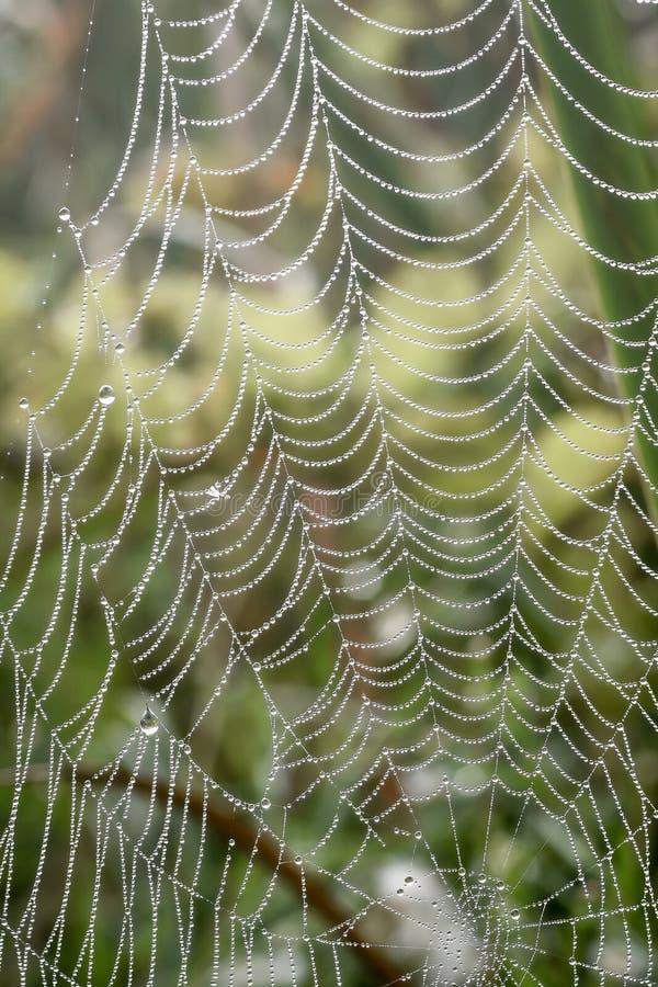 Spinnen-Netz mit Tau-Tröpfchen lizenzfreie stockfotografie