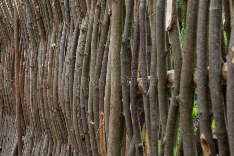 Spinnen von den Weidenniederlassungen Zaun von den Baumasten stockbilder