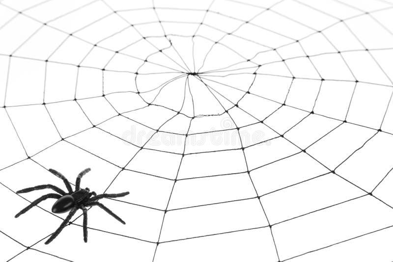 Spinnen-Web lizenzfreie stockfotos