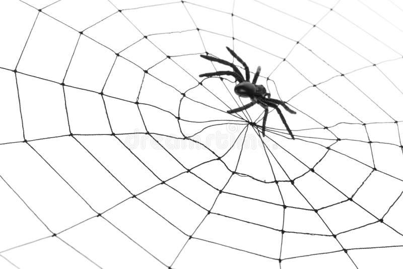 Spinnen-Web lizenzfreies stockbild