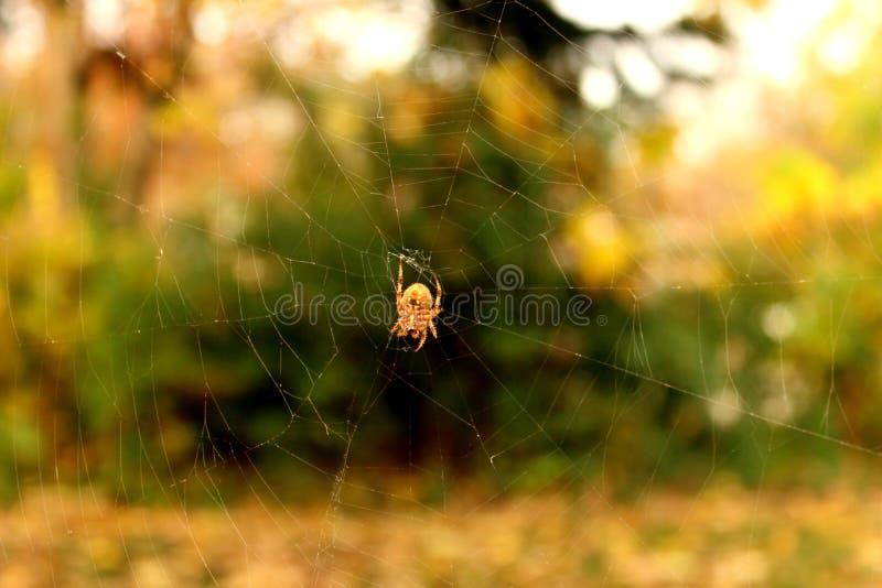 Spinnendes Spinnen-Netz stockfotos