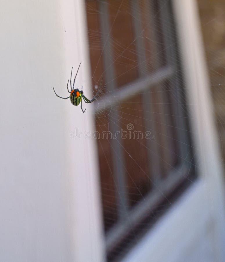 Spinnenfrontwitwe schwarzer Witwe HDRs stockbild