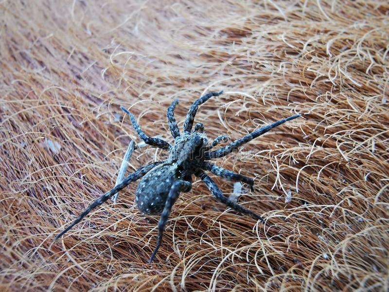 Spinnenklettern lizenzfreie stockfotografie