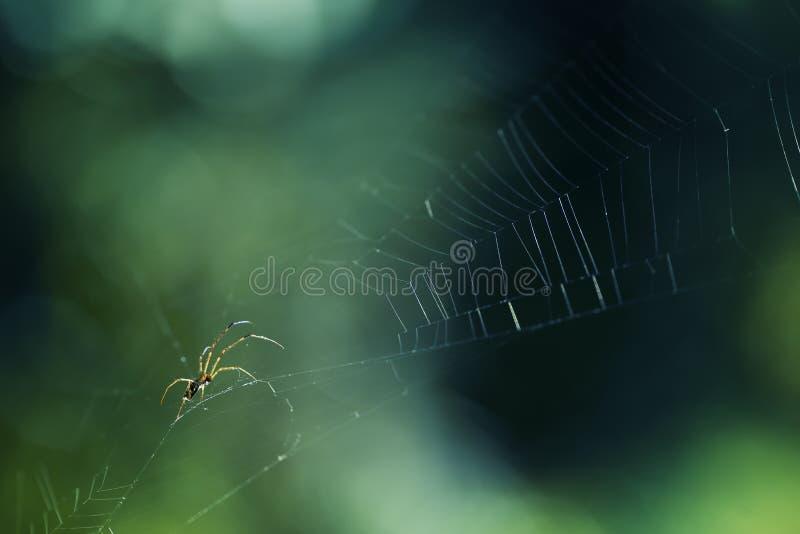 Spinnenmakroschuß auf dem Netz stockfoto