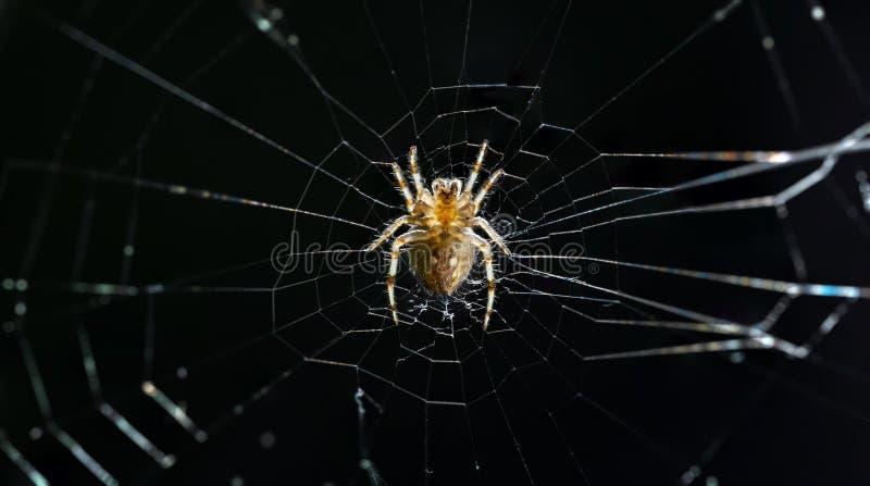 Spinnenmitte des Netzes lizenzfreie stockbilder