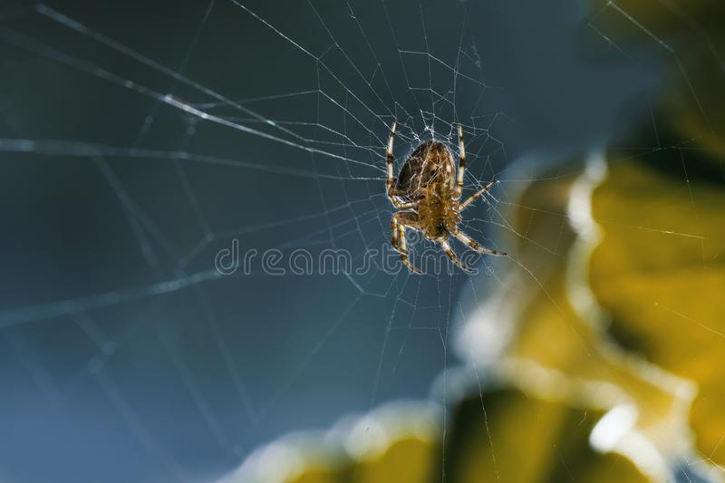 Spinnenmitte des Netzes lizenzfreies stockbild